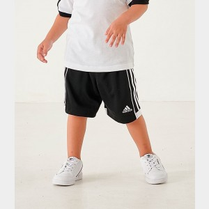 Little Boys' adidas Speed 18 Training Shorts Black/White Sales